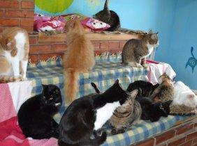 Actiune de sterilizare a noua pisici din Municipiul Chisinau
